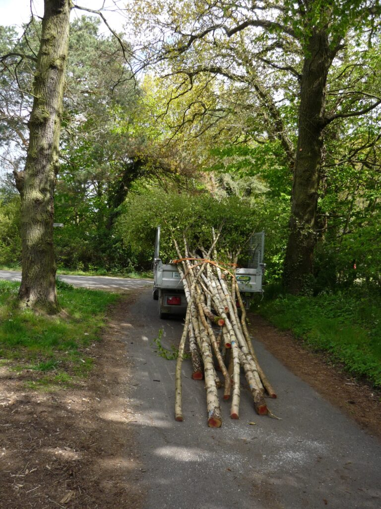 birch trees loaded on a trailer