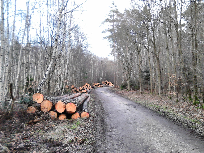Five piles of freshly cut logs lining the side of the road to the vanishing point.