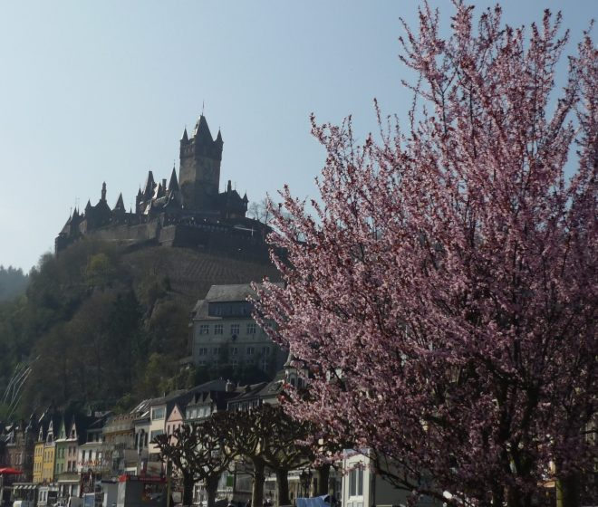 Blooming pink cherry tree with castle on a hill in the background