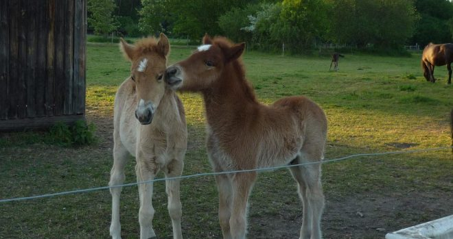 two colts that are friends