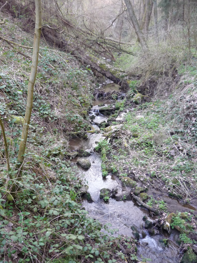 fairylike brook in the forest