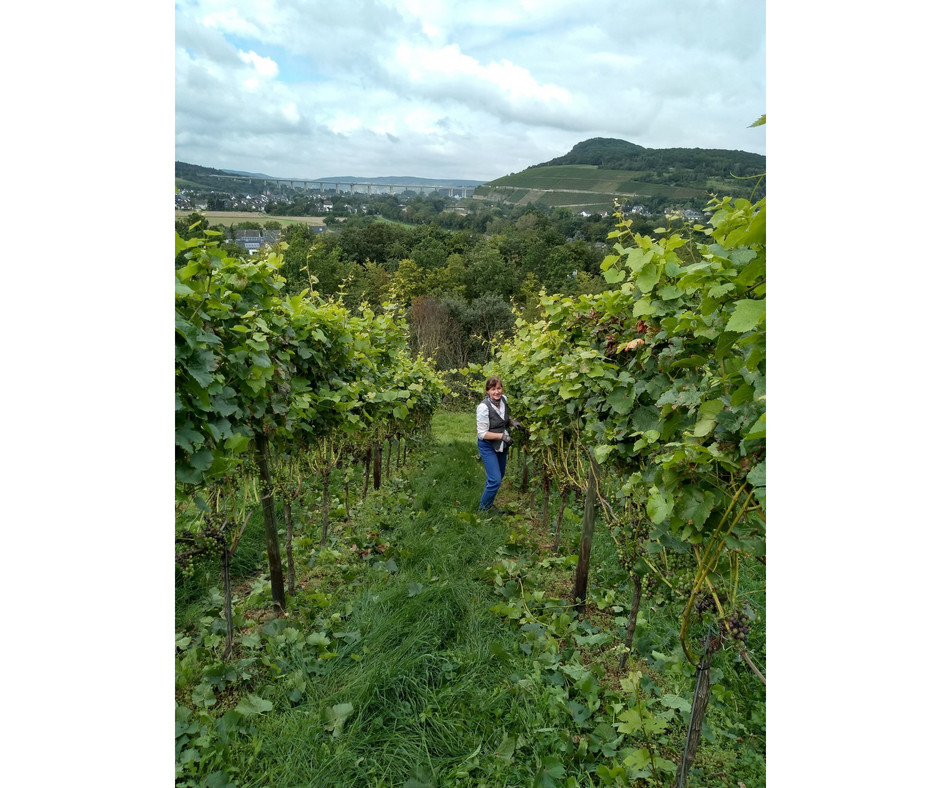 removing grape leaves in the vineyard